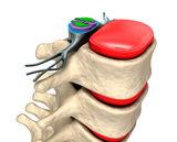 spinal-column-nerves-discs-29168246
